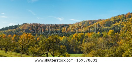 Autumnal forest in south germany