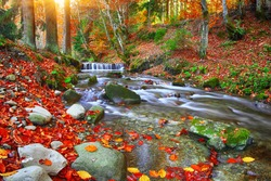 Autumnal forest, rocks covered with moss, fallen leaves. Mountain river with rapids and waterfalls at autumn time. Carpathian.