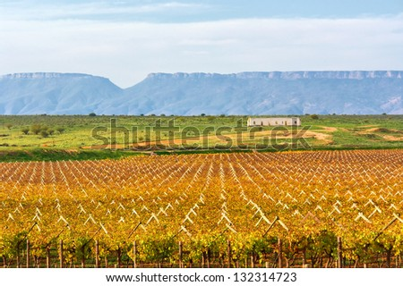 Autumnal fruit and grape farm. Shot in Gifberg Mountains, near Wanrhynsdorp, Western Cape, South Africa.