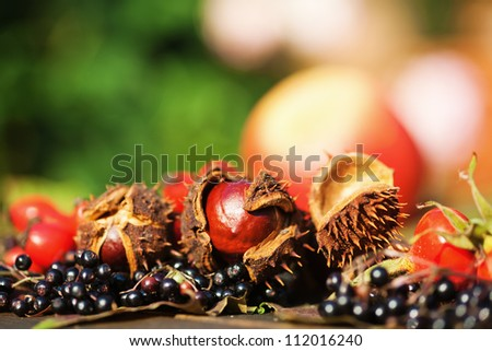 autumnal fruits in autumnal light