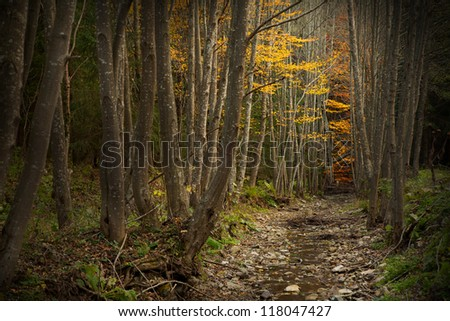 Autumnal image in the forest