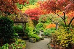 autumnal japanese garden in victoria, vancouver island, british columbia, canada