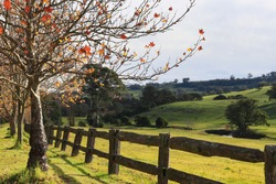 Autumnal landscape nature photography Southern Highlands NSW Australia