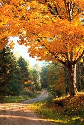 autumnal landscape with big tree or road in forest