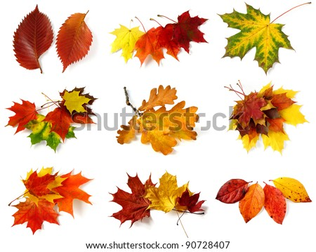 autumnal leaves collection on white - stock photo
