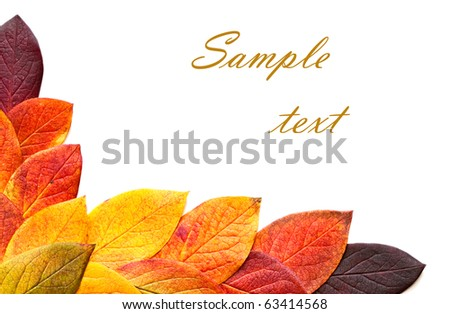 Autumnal leaves isolated on a white background.