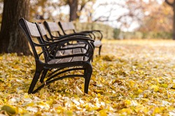 Autumnal park with bench and leaves