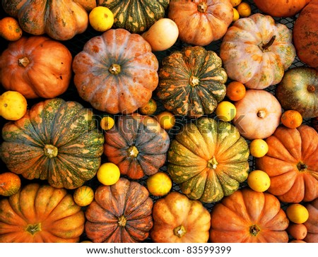 Autumnal pumpkins, harvest