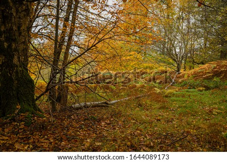 Autumnal scene grass covered with a carpet of golden leaves, fallen tree leads the viewer's eye into the scene from the left side, backlit by the eventing sun.