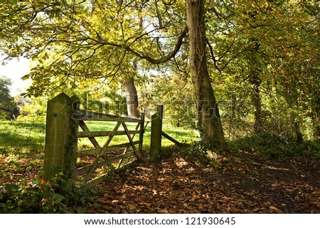 Autumnal woodland scene with a wooden five barred gate and a carpet of fallen leaves on the ground