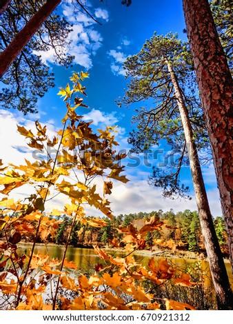 Autumns Tall trees #670921312