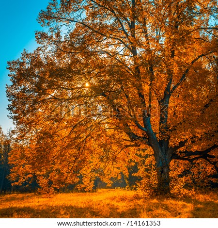 autunm tree in the park perfect fall scenery ez canvas