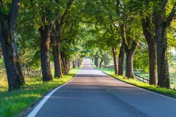 Avenue of old linden trees in Masuria; Poland