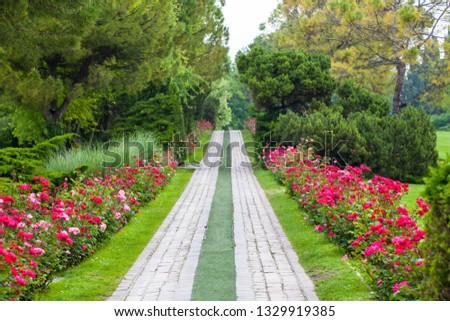 Avenue Roses
