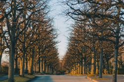 Avenue of trees in the Bois-de-Vaux cemetery in the Lausanne area of Switzerland during early evening hours in winter. Cold but sunny time in the cemetery.