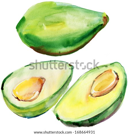 Avocado fruit isolated. Handmade watercolor painting illustration on a white paper art background