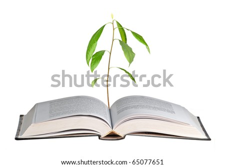 Avocado seedling growing from open book - stock photo
