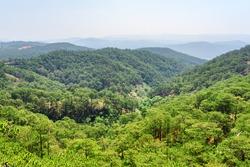 Awesome aerial view of evergreen pine woods around Da Lat (Dalat), Vietnam. Dalat is a popular tourist destination of Asia.