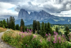 Awesome Alpine highlands in summer. Amazing cloudy Landscape of Dolomites Alps. Beautiful nature background.  Alpe di Siusi. Seiser Alm. Dolomites. Italy. Vivid morning over the alpine valley.