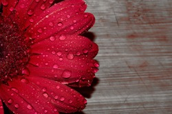 Awesome and beautiful Red Flower
