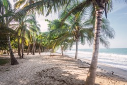 awesome beach with palmtrees along the caribbean coast