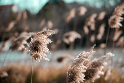 Awesome Shot of a Beautiful grain-coloured Plant with a shallow depth of field during a hot sunny day