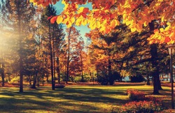 Awesome sunny landscape in the forest. Wonderful Autumn scenery. Picturesque view of nature. Amazing natural Background. Sun rays through colorful trees. Incredible view on alpine forest lakeside