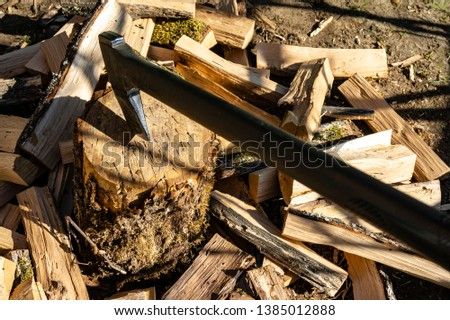 Ax with long handle for splitting stumps sticks out into large oak stump. Around oak stump lie firewood split with ax.