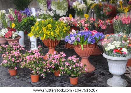 Shutterstock Azalea, Hyacinth, Mimosa and various Spring Flowers in the colorful Campo de Fiori, flower market, Rome Italy, Spring