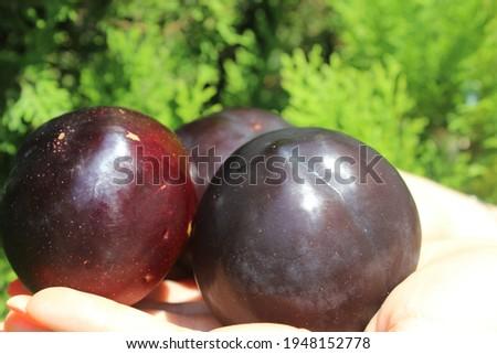 Azerbaijan natural fresh black plum
