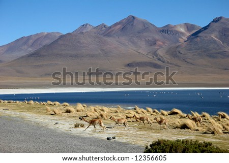 Azure clear sky over the mountain range with flock of birds on the water and frightened running flock of llamas. Laguna, Altiplano, Bolivia