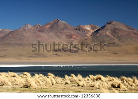 Azure clear sky over the mountain range with flock of birds on the water. Laguna, Altiplano, Bolivia