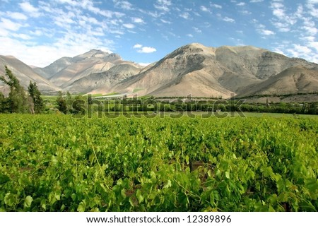Azure cloudscape over the vineyard surrounded with hills. Valle del Elqui. Chile