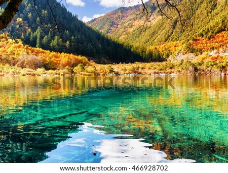 Stock Photo Azure crystal clear water of lake among autumn woods, the Shuzheng Valley, Jiuzhaigou nature reserve (Jiuzhai Valley National Park), China. Amazing submerged tree trunks are visible on bottom of pond.