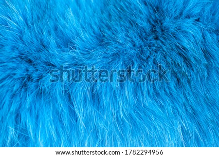 Azure furry texture backdrop close up. Abstract animal navy blue fur background. Fluffy turquoise pattern for design
