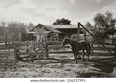 B&W Arabian Mare at Old Ranch