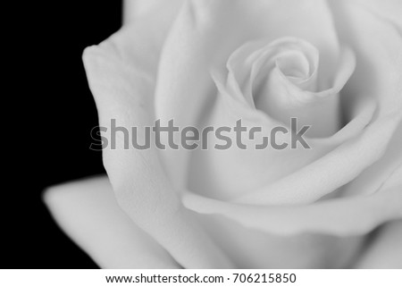 B&W roses with copy space tor text Stock fotó ©