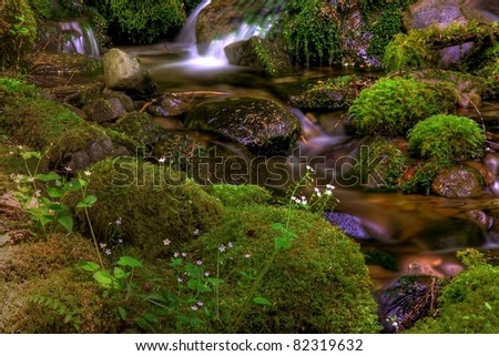 Babbling Brook Slowly Meandering Over Moss Covered Rocks And Foliage In Olympic Mountains National Park In The State Of Washington In The Northwest Territories Of The United States.