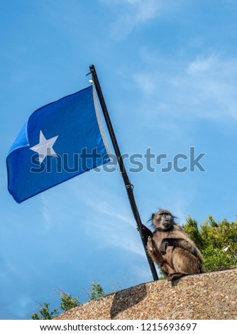 Baboon with Somali flag on blue sky background. The Chacma baboon (Papio ursinus), also known as the Cape baboon.