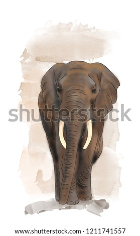 Baby african elephant watercolor illustration