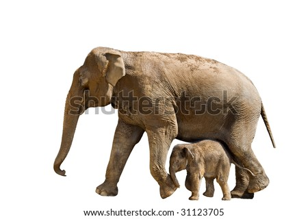 Baby and mother elephant, isolated white