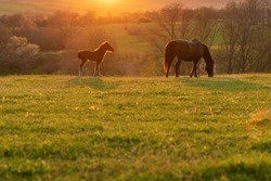 Baby and mother horse on the field grass