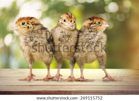 Baby animal, baby animals, bird.
