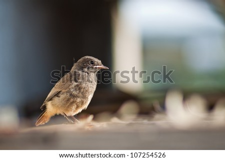 Baby bird - stock photo