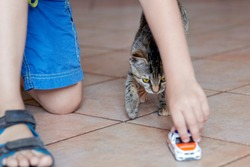 Baby boy plays with cute little cat of tabby color on the ceramic floor with children toy car. Friendship of pretty kitten and human child. Indoors, close up, selective focus, copy space.