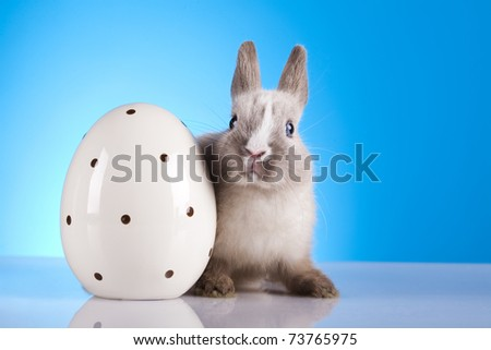 Baby bunny, Easter animal
