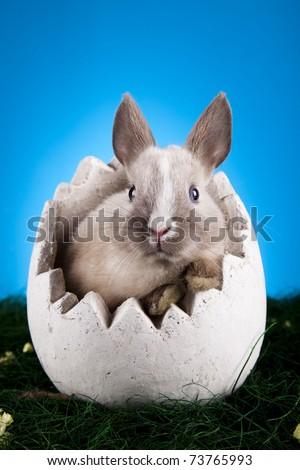 Baby bunny, Easter animal