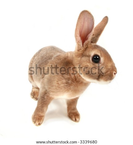 Baby bunny Isolated on white #3
