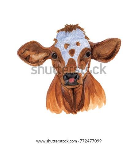 Baby calf illustration
