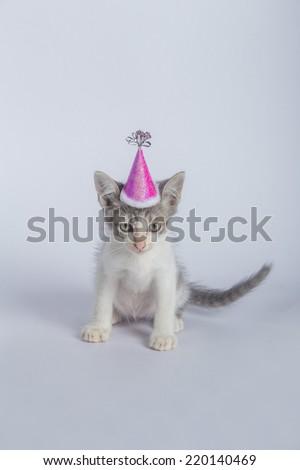 baby cat happy party